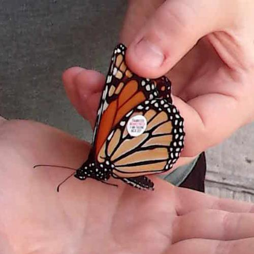 Students Track Monarch Butterfly Migration